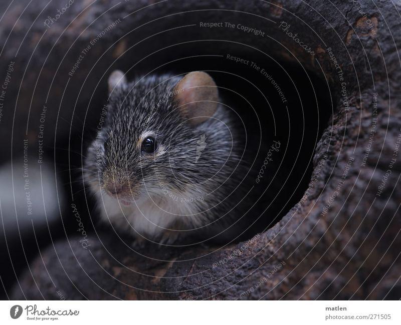 Mausi Baum Tier grau braun Höhle