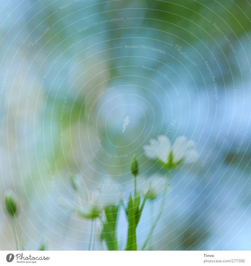 blurred vision Natur Pflanze Frühling Schönes Wetter Blume Blüte Wildpflanze blau grün rosa weiß Blühend zart zartes Grün klein Aquarell mehrfarbig