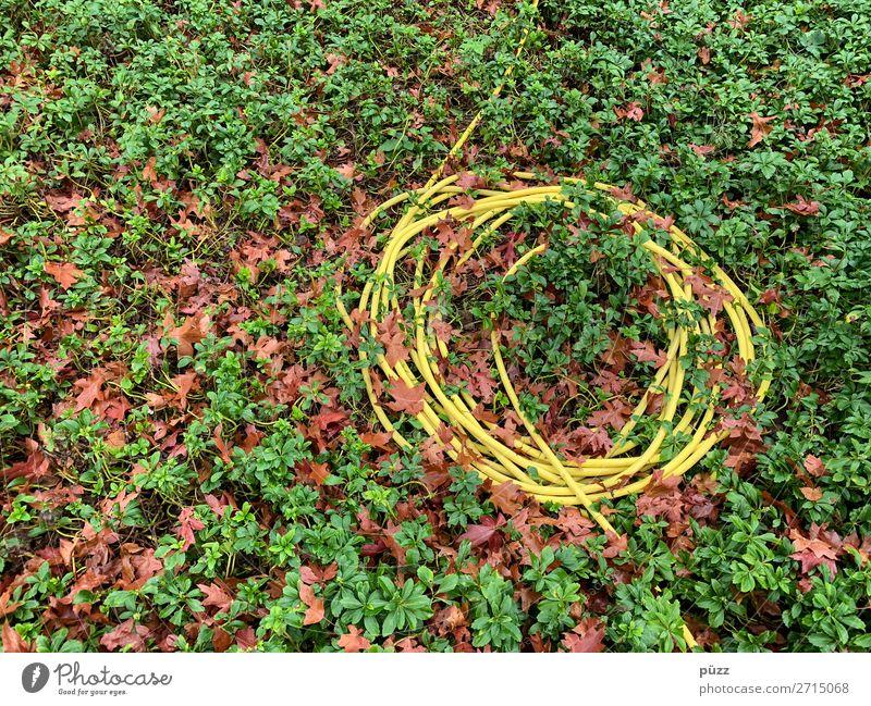 Lange Leitung Umwelt Natur Pflanze Erde Wasser Blatt Grünpflanze Bodendecker Garten Park Zeichen Linie Knoten gelb grün Schlauch Gärtner Gärtnerei Gartenarbeit