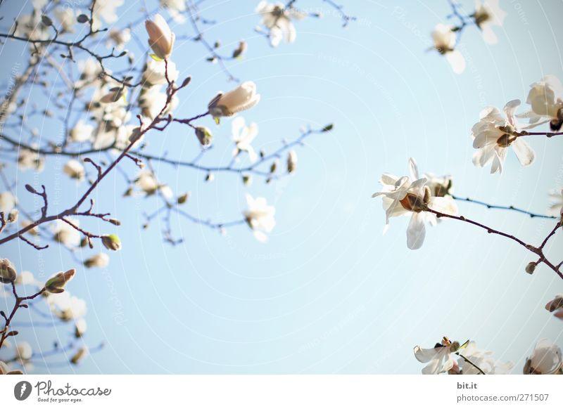 Sonnengruß... Himmel Natur blau Pflanze weiß Sommer Baum Frühling Blüte Feste & Feiern rosa Geburtstag Klima Lebensfreude Blühend Schönes Wetter