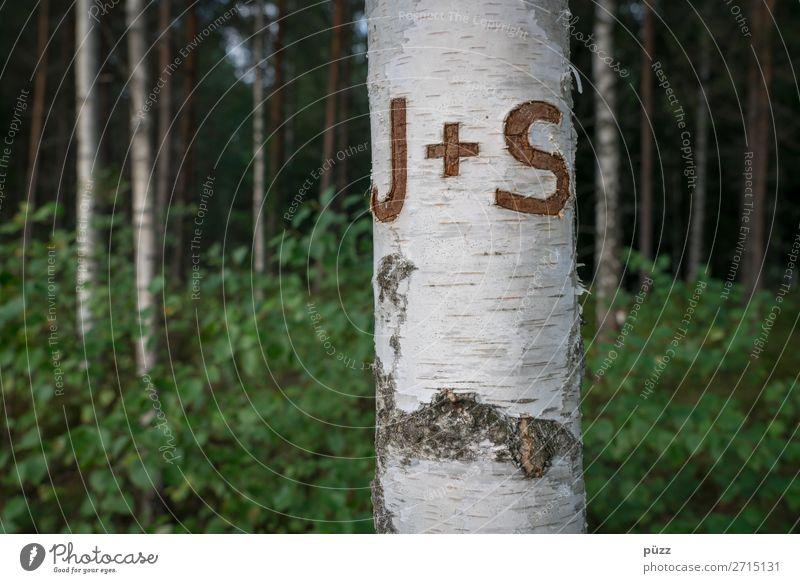 J + S Valentinstag Umwelt Natur Landschaft Pflanze Baum Birke Birkenwald Birkenrinde Holz Zeichen Schriftzeichen Plus Liebe träumen braun grün weiß Gefühle