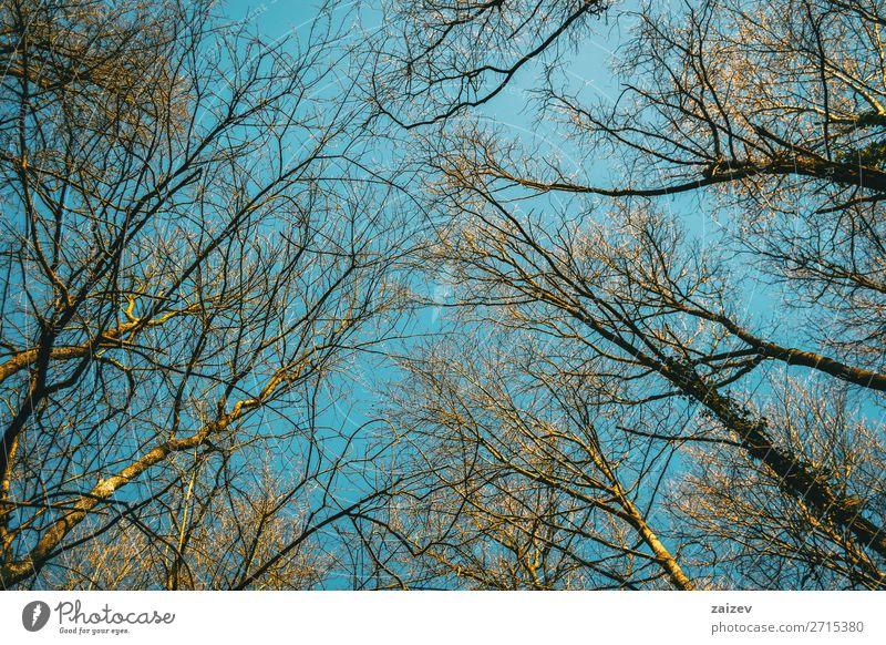 Baumspitzen, die in den vom Sonnenlicht beleuchteten Himmel zeigen schön Umwelt Natur Pflanze Herbst Wald Wachstum dünn natürlich oben blau Top Niederlassungen