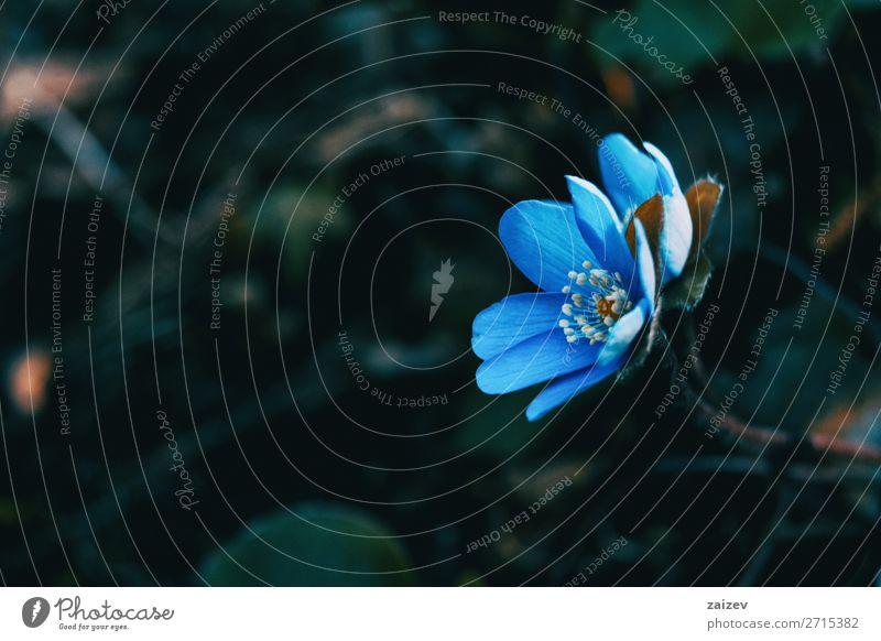 Natur Pflanze blau schön grün weiß Blume Wald Blüte natürlich wild frisch Wachstum Beautyfotografie Duft Blütenknospen