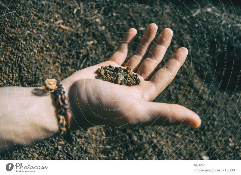 Nahaufnahme einer vulkanischen Erde, die von einer menschlichen Hand mit einem Armband gehalten wird Ferien & Urlaub & Reisen Abenteuer wandern Mensch Finger