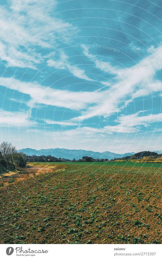 Eine vertikale Aufnahme einer sonnigen ländlichen Landschaft Ferien & Urlaub & Reisen Ausflug Berge u. Gebirge wandern Umwelt Natur Himmel Wolken Gras Sträucher