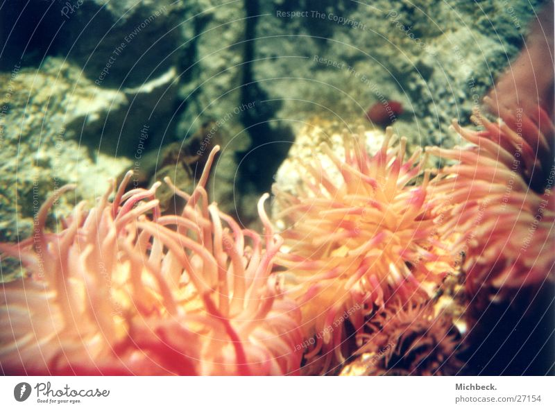 Pflanze oder Tier Tentakel Sealife
