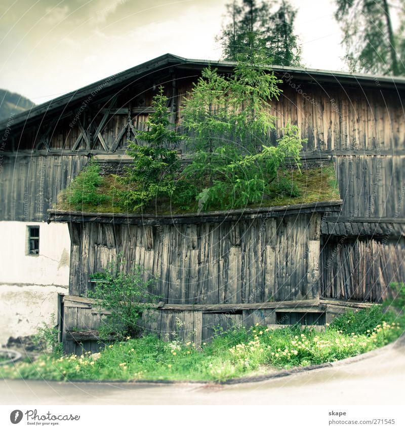 Begrünt die Dächer! Natur Baum Pflanze Wald Umwelt Stimmung Tourismus Dorf nachhaltig Waldboden