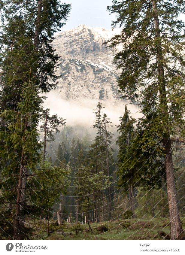 Forest impression Natur Baum ruhig Wald Berge u. Gebirge Alpen Gipfel Klettern Moos Bergsteigen