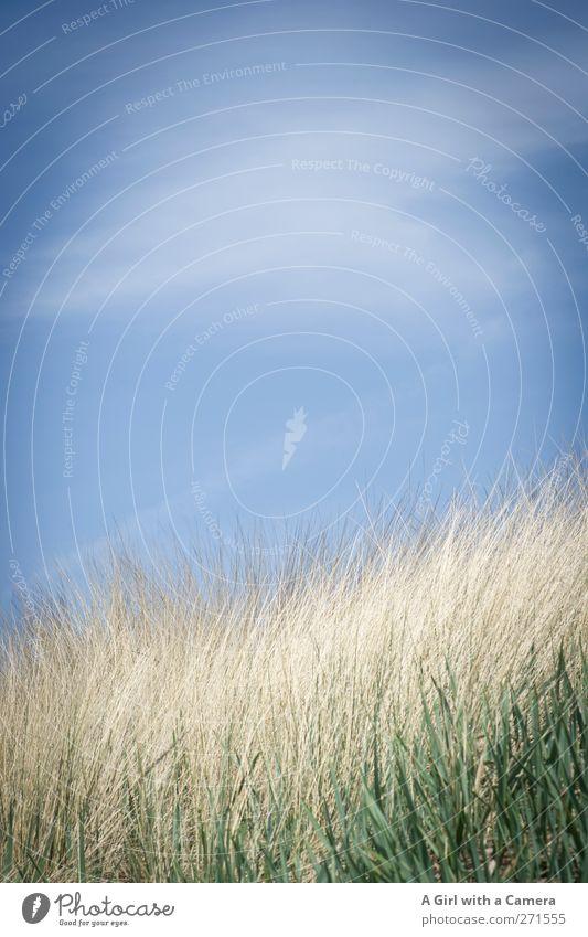 Hiddensee l let's just be Himmel Natur blau Wolken Umwelt Landschaft Küste hell Insel Schönes Wetter Sauberkeit Hügel Ostsee