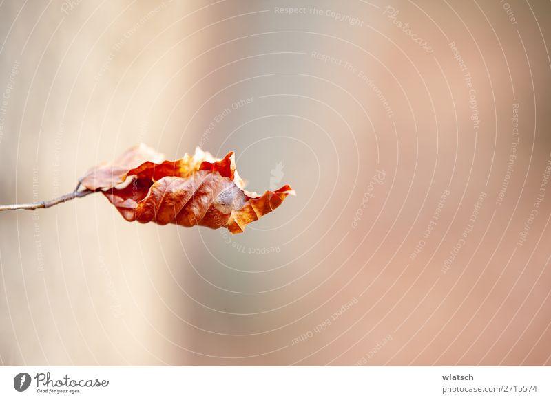 Herbstblatt Umwelt Natur Klimawandel Schönes Wetter Holz schön Frühlingsgefühle kalt Umweltverschmutzung Umweltschutz Vergänglichkeit Blatt Farbfoto mehrfarbig