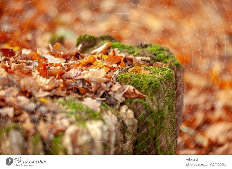 Sommerende ruhig Jagd Ausflug Freiheit wandern Umwelt Natur Landschaft Herbst Baum Moos Blatt Wald natürlich Abenteuer Farbfoto mehrfarbig Außenaufnahme Tag