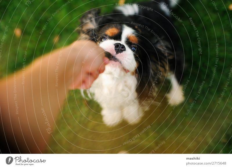Hund spielt mit seinem Besitzer mit Spielzeug auf dem Weg. Freude Glück schön Erholung Spielen Ferien & Urlaub & Reisen Freiheit Sommer Garten Natur Tier Gras