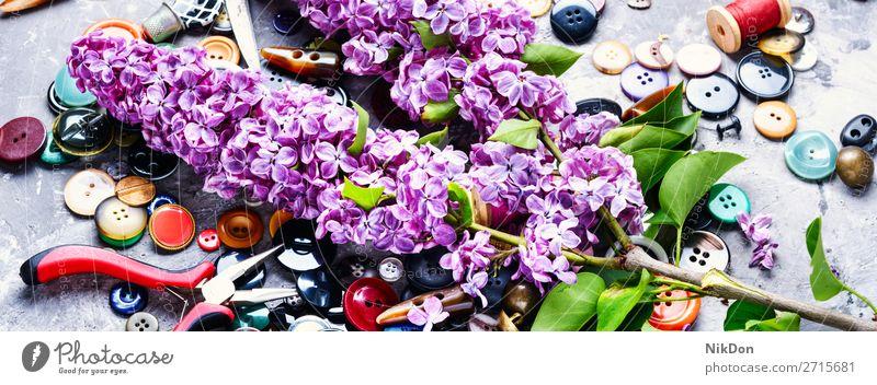 Bunte Nähknöpfe Schaltfläche Nähen Mode Design Bekleidung nähen Fliederbusch farbenfroh Textil Kunststoff kreisen Sammlung Schneider rund Nahaufnahme Handwerk