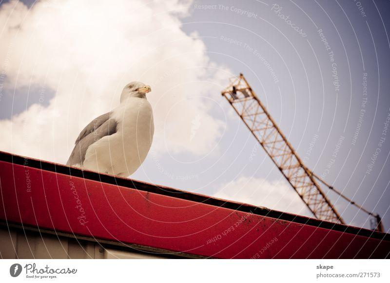 Bauaufsicht Hafenstadt Dach Tier Vogel hell Leben Natur Rotterdam Farbfoto Außenaufnahme Tag Tierporträt