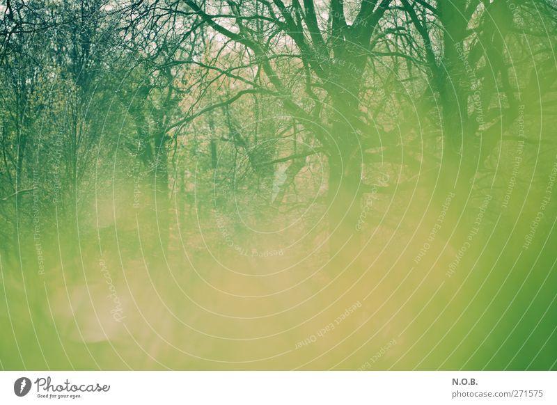 Verdeckt Umwelt Natur Pflanze Frühling Baum Garten Park Wiese Wald liegen grün Geäst Farbfoto Gedeckte Farben Außenaufnahme Menschenleer Textfreiraum links