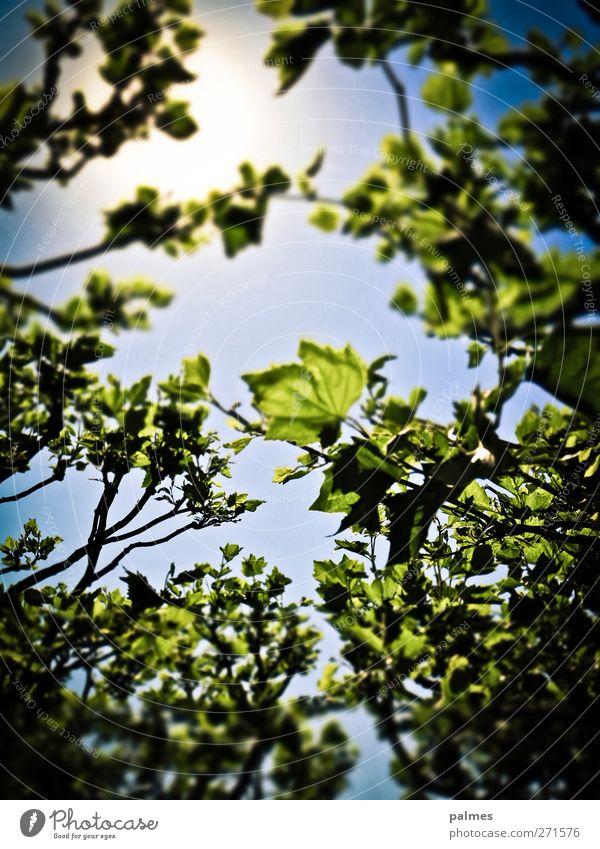 Köln 120526 göttlicher Rosengarten I Sinnesorgane Erholung Sommer Sonne Garten Umwelt Natur Sonnenlicht Pflanze Baum Blatt Farbfoto Außenaufnahme Menschenleer