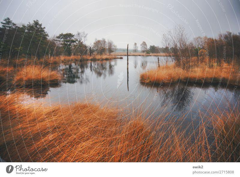 Moorland Umwelt Natur Landschaft Pflanze Luft Wasser Wolken Horizont Herbst schlechtes Wetter Regen Baum Gras Sträucher Wildpflanze Wald Sumpf Teich See trist