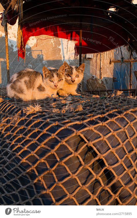 Zwei junge Katzen, liegen auf Fischernetz in der Morgensonne. Tier Haustier 2 Tierpaar Tierjunges schlafen Fischerdorf Farbfoto Außenaufnahme Menschenleer