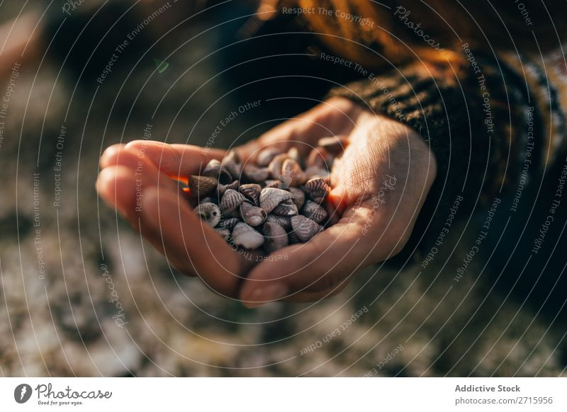 Hand haltend kleine Muscheln Muschelschale Natur marin natürlich Objektfotografie Tier schön Detailaufnahme Nahaufnahme Weichtier Wasser aquatisch Krebstier
