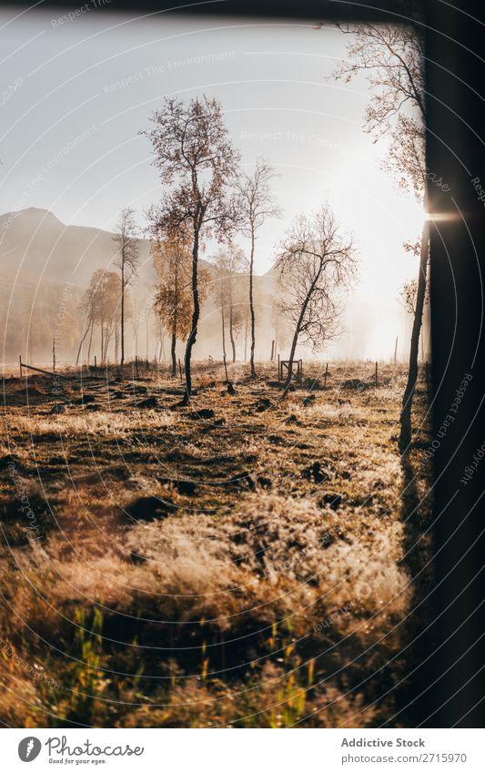 Nebliger Wald im Herbst Nebel Berge u. Gebirge Hügel Natur Landschaft Baum Jahreszeiten Licht Morgen Orange klein Blatt Park Wetter schön mehrfarbig natürlich