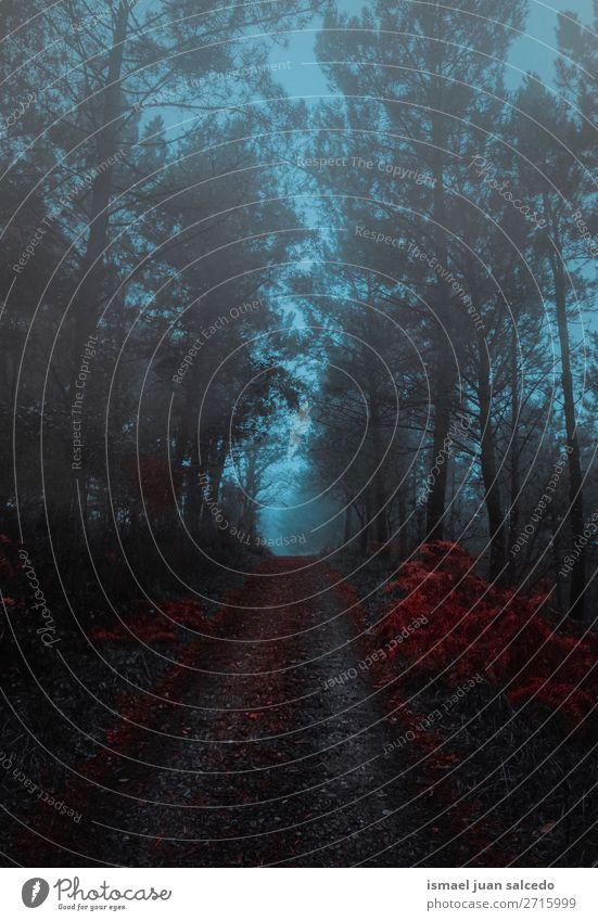 Ferien & Urlaub & Reisen Natur Landschaft rot Baum Erholung Blatt ruhig Wald Berge u. Gebirge Straße Wege & Pfade Platz Ast Spanien Gelassenheit