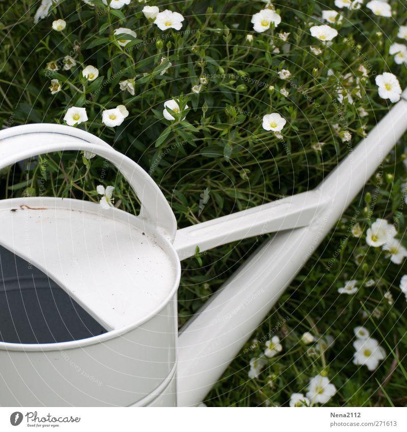 White summer Natur Pflanze Frühling Sommer Schönes Wetter Blume Gras Garten ästhetisch weiß gießen Gießkanne heiß Metallwaren Stillleben ruhend Wasser Wärme