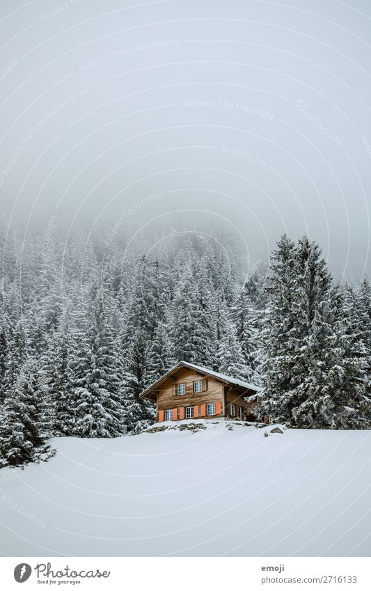 Arnisee XII Umwelt Natur Landschaft Winter Nebel Schnee Baum Wald Hügel Berge u. Gebirge Haus außergewöhnlich kalt weiß Ferienhaus Schweiz Tourismus