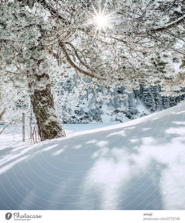 Arnisee VII Umwelt Natur Landschaft Winter Schönes Wetter Schnee Baum Berge u. Gebirge außergewöhnlich natürlich blau weiß Tourismus ruhig Schweiz Ausflug
