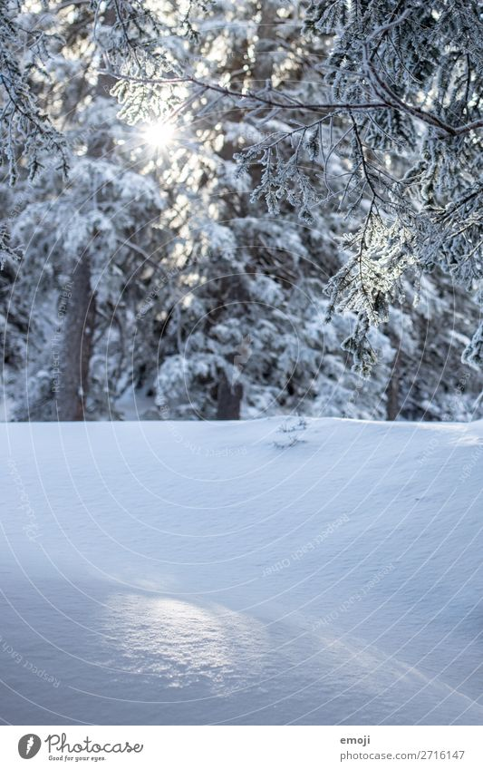Glitzern im Schnee Umwelt Natur Landschaft Winter Schönes Wetter Pflanze Baum Wald kalt blau weiß Farbfoto Außenaufnahme Detailaufnahme Menschenleer Tag Licht