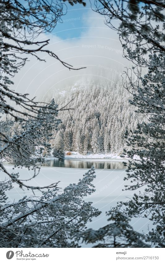 Arnisee VI Umwelt Natur Landschaft Winter Schönes Wetter Schnee Baum Berge u. Gebirge See außergewöhnlich natürlich blau weiß Tourismus ruhig Gebirgssee Schweiz