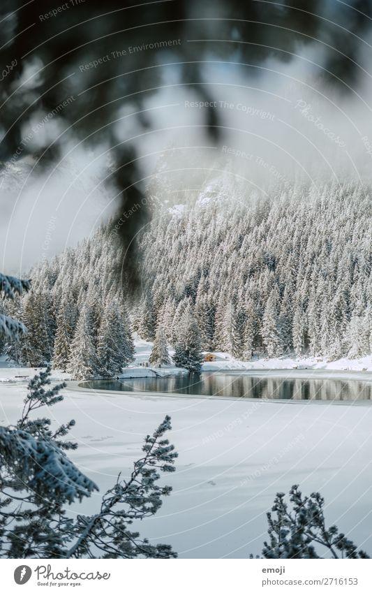 Arnisee VIII Umwelt Natur Landschaft Winter Schönes Wetter Schnee Baum Berge u. Gebirge See außergewöhnlich natürlich blau weiß Tourismus ruhig Gebirgssee