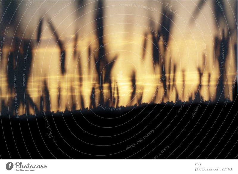 corn field dusk Feld Wolken Sonnenuntergang Korn . Himmel .ähren Getreide .rötlich Silhouette