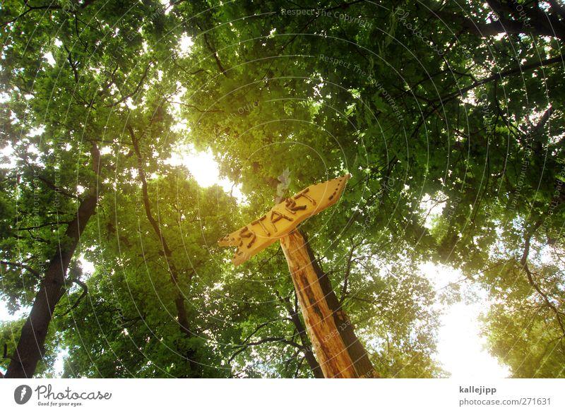 trimm dich! Natur Baum Wald Umwelt Holz Freizeit & Hobby Schilder & Markierungen Beginn Schriftzeichen Hinweisschild Zeichen Fußweg Pfeil Richtung Baumkrone