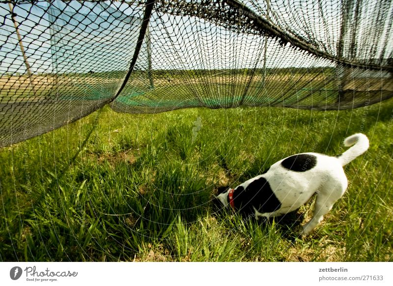 Thiessow Hund Natur Ferien & Urlaub & Reisen Pflanze Sommer Meer Tier Erholung Ferne Umwelt Landschaft Spielen Freiheit See Ausflug Tourismus