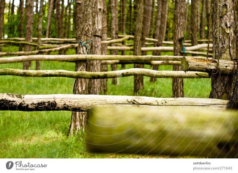 Holz Natur Ferien & Urlaub & Reisen Baum Sommer Meer Erholung Wald Umwelt Landschaft Gefühle Ausflug Tourismus Abenteuer Hafen Landwirtschaft Ostsee