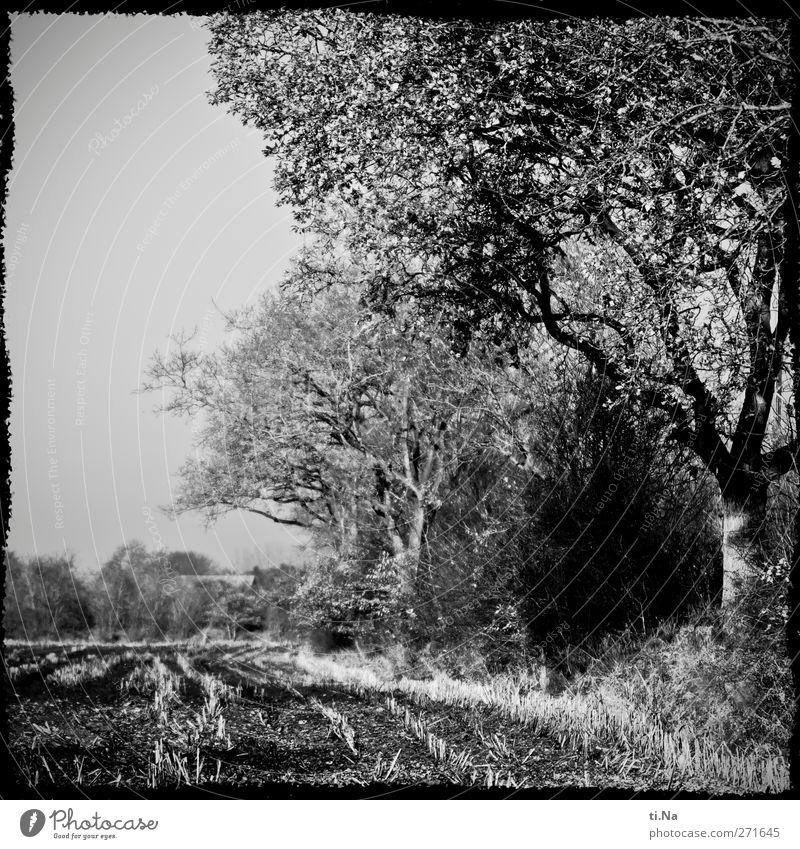 künstlich gerahmter Acker Natur weiß Stadt Baum Pflanze schwarz Umwelt Landschaft Herbst grau Feld Wachstum Landwirtschaft Forstwirtschaft