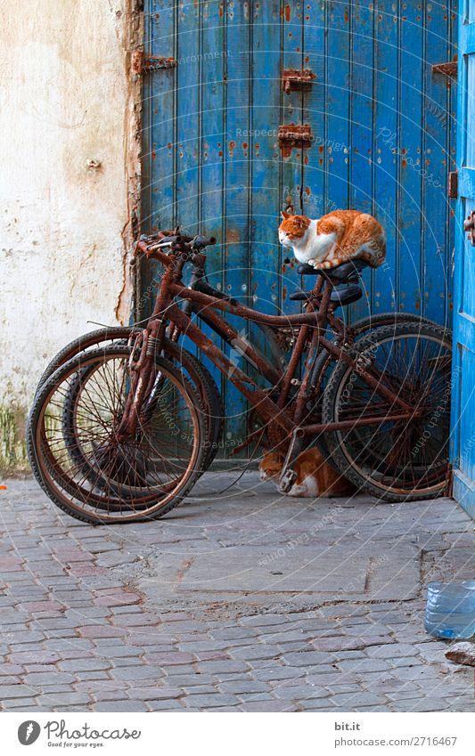 Garfield träumt sich durch die Gassen Katze Ferien & Urlaub & Reisen blau Haus Tier Ferne Wand lustig Tourismus Mauer Freiheit Ausflug Verkehr träumen Tür