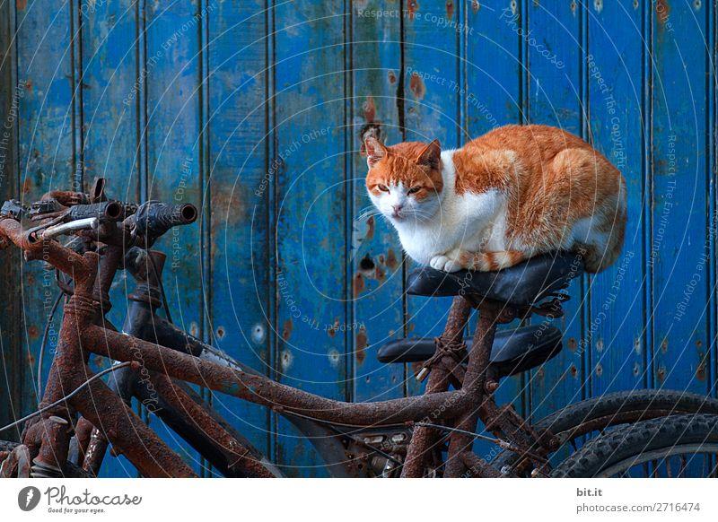 Bin ich seltsam? I Gedankenspiele Katze Tier lustig Sport außergewöhnlich Fahrrad verrückt Hauskatze Haustier Rad Surrealismus skurril hocken
