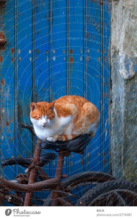 On the Road again l komm wir fahrn nach Panama Katze Ferien & Urlaub & Reisen blau rot Tier Straße Wand lustig Tourismus Mauer außergewöhnlich Freiheit