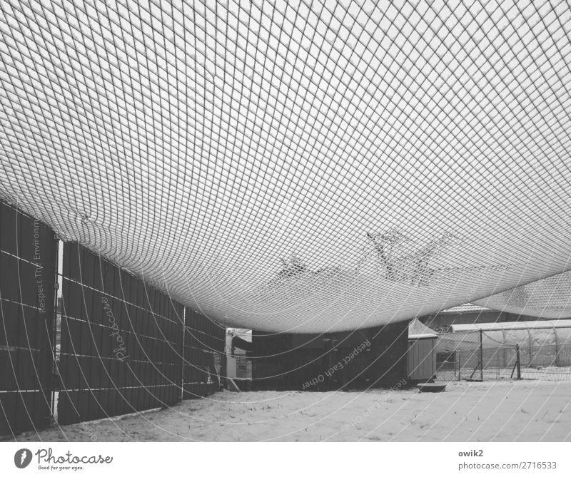 Winternet Schnee Gras Wiese Netz gespannt Gehege Gestell hängen kalt durchsichtig schemenhaft Gewächshaus Baum Pferch leer Schutz Sicherheit Schwarzweißfoto
