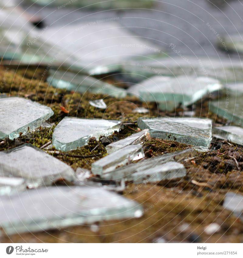 AST 5 | Glasbruch Moos Glasscherbe Scherbe alt glänzend liegen authentisch eckig klein braun grau grün weiß Gefühle gefährlich Gewalt bizarr einzigartig