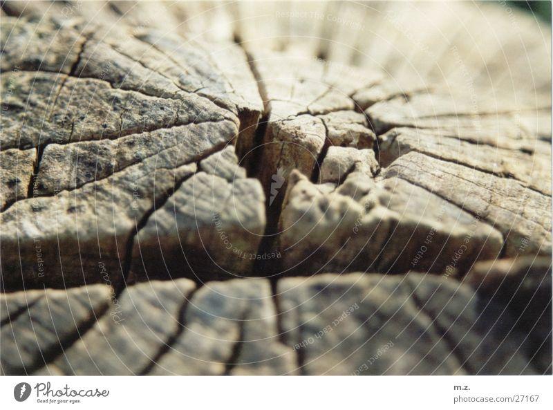 baumstumpf Holz matt Baum . zerklüftet Riss Baumstamm Makroaufnahme .alt