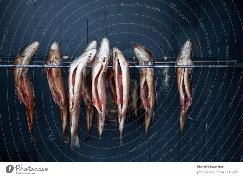 AST5   ...wie er wieder duftet Metall Ernährung Lebensmittel Fisch Symbole & Metaphern Gastronomie skurril Duft Bioprodukte hängen Außenseiter