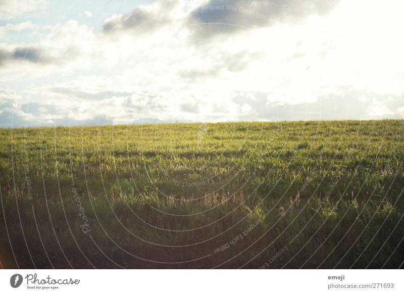 nach dem Regen Umwelt Natur Himmel Wolken Frühling Sommer Klima Wetter Schönes Wetter Gras Wiese Feld hell Farbfoto Außenaufnahme Menschenleer Textfreiraum oben