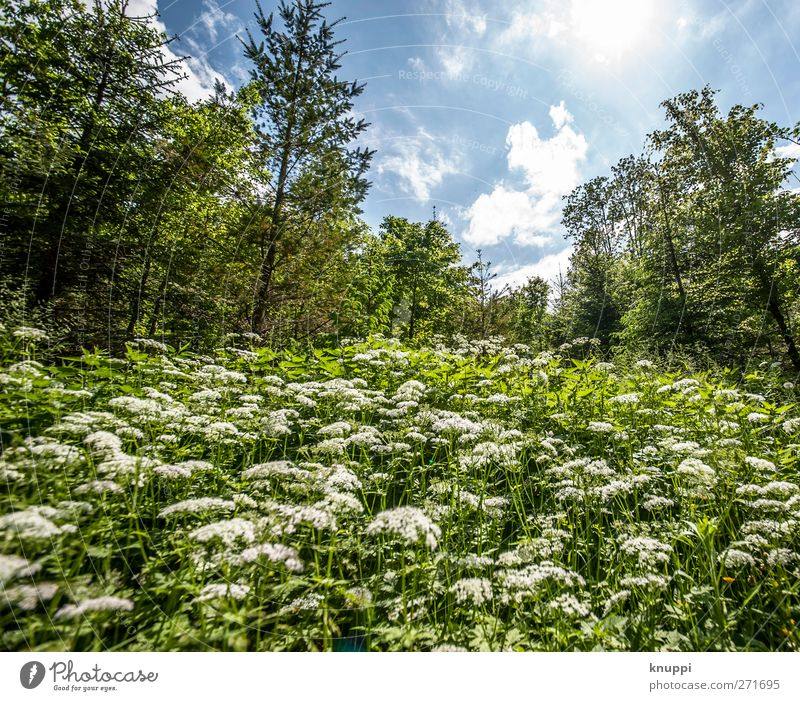 zwölf Millimeter Himmel Natur blau weiß grün Baum Pflanze Sonne Sommer Blume Blatt Wolken Wald Umwelt Landschaft Wiese