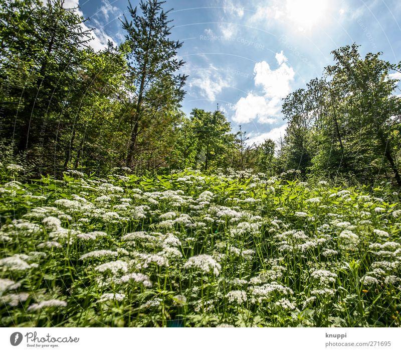 zwölf Millimeter Umwelt Natur Landschaft Pflanze Himmel Wolken Sonne Sonnenlicht Frühling Sommer Wetter Schönes Wetter Baum Blume Gras Sträucher Blatt Blüte