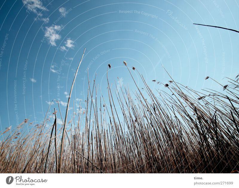 Hiddensee | abtauchen Himmel Natur Ferien & Urlaub & Reisen Pflanze Wolken ruhig Erholung Umwelt Leben Gefühle Gras Küste Glück Zufriedenheit Sicherheit