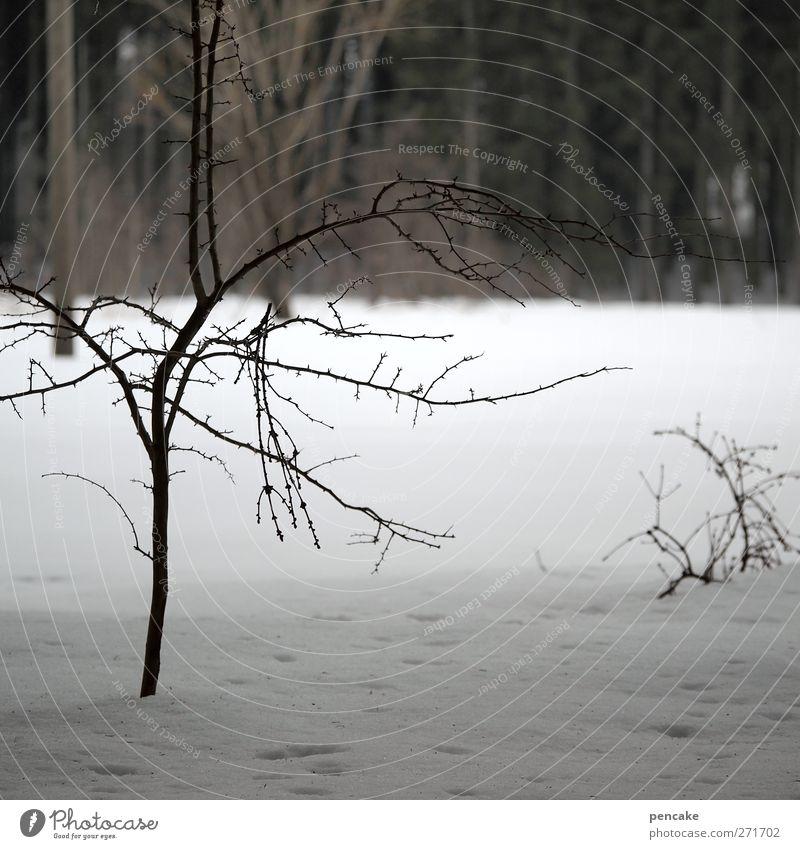 traurig bin ich sowieso Baum Winter Wald Landschaft Schnee Traurigkeit warten Trauer demütig resignieren ohnmächtig Selbstlosigkeit