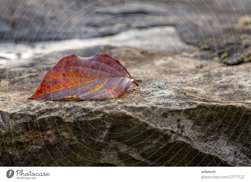 Auf dem Felsen Umwelt Natur Landschaft Erde Sommer Herbst Feld Berge u. Gebirge schön Umweltschutz verlieren Wandel & Veränderung Farbfoto Außenaufnahme