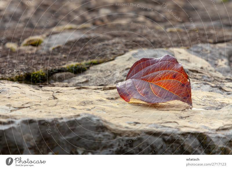 """Felsen im Herbst Umwelt Natur Landschaft Erde Blatt Garten Wald braun ruhig Klima Vergänglichkeit Wandel & Veränderung """"Adern Leben Wasser Fallen Winter"""
